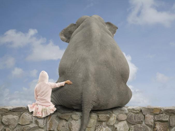 Bueno, quizá no un elefante taaan grande, pero uno bebe si pueden levantar