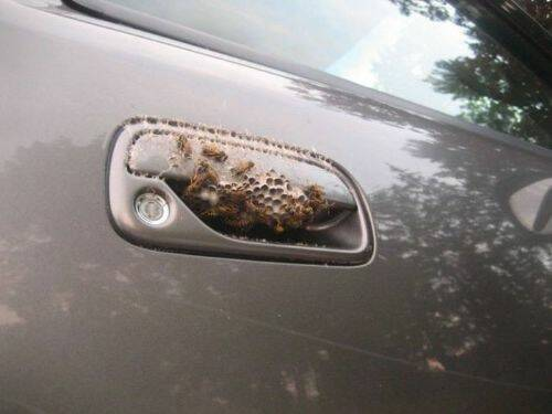 Bueno, de todos modos tus llaves las tenía una serpiente