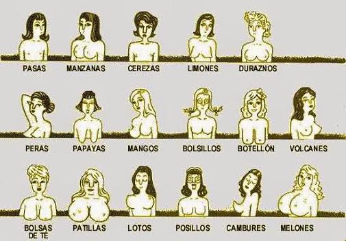 Y muchos tipos de senos