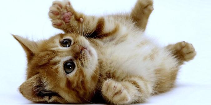 gatito-tierno-y-peuqueno