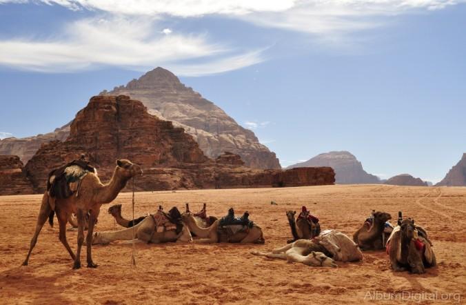 camellos-en-wadi-rum__DSC5549_1200px.jpg